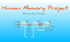 Copy of Human Memory Project