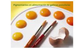 Copy of pigmentantes en alimentacion de gallinas ponedoras