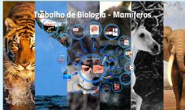 Trabalho de Biologia - Mamíferos