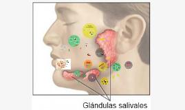 Copy of Glándulas Salivales