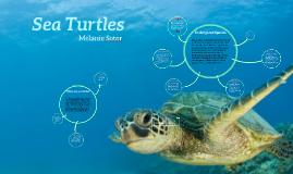 Copy of Sea Turtles