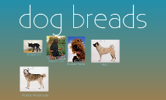 dog breads