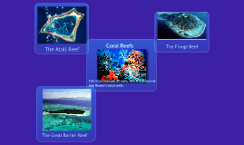 The Coral Reef Ecosystem