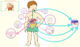 proceso de digestion y absorcion