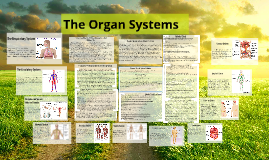Copy of The Organ Systems