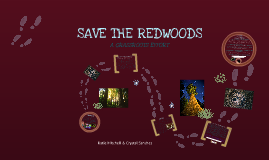 Copy of Copy of Save The Redwoods A Grassroots Effort