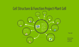 Cell Structure & Function Project-Plant Cell