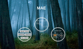 Copy of MAE