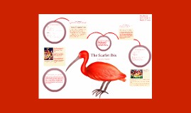The Scarlet Ibis