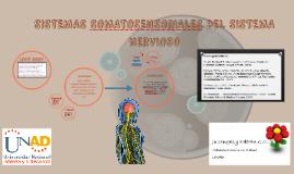 Sistemas Somato-Sensoriales del Sistema Nervioso By Juliangelly Beltran UNAD