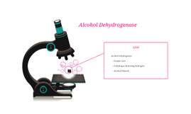 Alcohol Dehydrogenase
