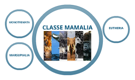 Copy of Classe Mamalia