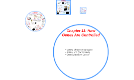 Chapter 11: How Genes Are Controlled