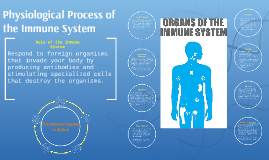 Physiological Process of the Immune System
