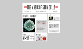 THE MAGIC OF STEM CELLS