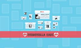 Chinchilla Care
