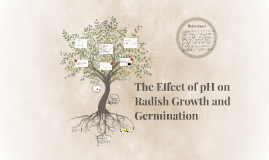 Copy of Effect pH on radish growth and germination