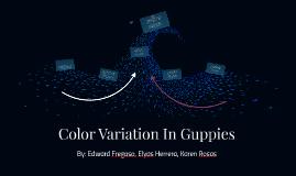 Color Variation In Guppies