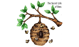 Quotes In The Secret Life Of Bees Enchanting The Secret Life Of Bees Bee Quotesam Spralja On Prezi