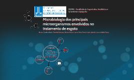 Microbiologia dos principais microorganismos envolvidos no t