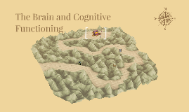 The Brain and Cognitive Functioning