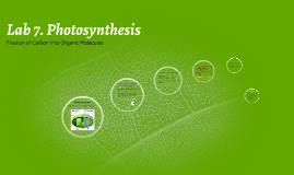 Lab 6. Photosynthesis