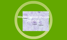 Mitosis: Cell Division