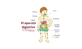Copy of El aparato digestivo