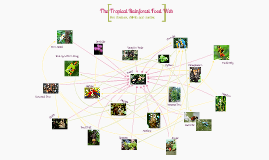 Copy of The Tropical Rainforest Food Web