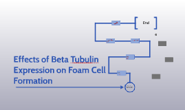 Effects of Beta Tubulin Expression on Foam Cell Formation