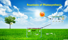 SHORT version of Biology Chapter 8 Section 3 Reactions of Photosynthesis