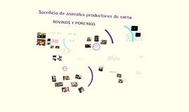 Copy of Copy of Sacrificio de animales