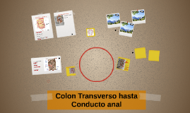 Colon Transverso hasta Conducto anal