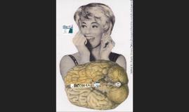 Género, sexo y cerebro. 8 de marzo, Urcuqui