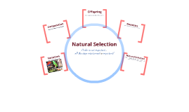 Copy of Natural Selection