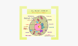 Cell Analogy - Cristina Kim