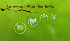Photosynthesis: Plants a Brief Review
