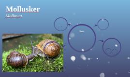 Mollusker