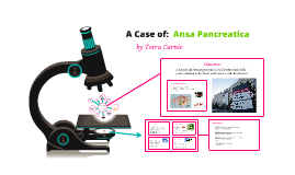 Ansa Pancreatica