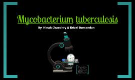 Mycobaterium tuberculosis