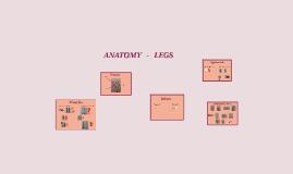 ANATOMY  -   LEGS