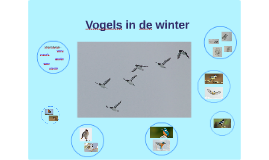 Vogels in de winter