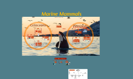 Copy of Marine Mammals