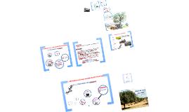 Copy of valorisation des sous produits de l'olivier