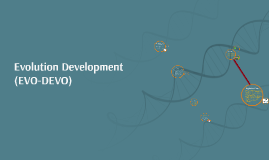Copy of Evolution Development (EVO-DEVO)