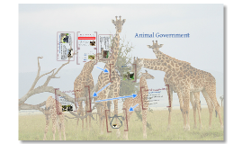 Animal Government