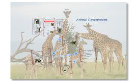 Animal Government