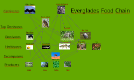 everglades food chain