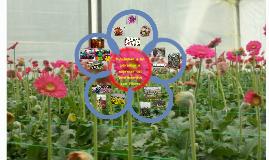 Producción de Flores