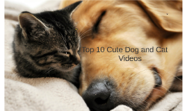 Top ten of the cutest cat's and dog videos